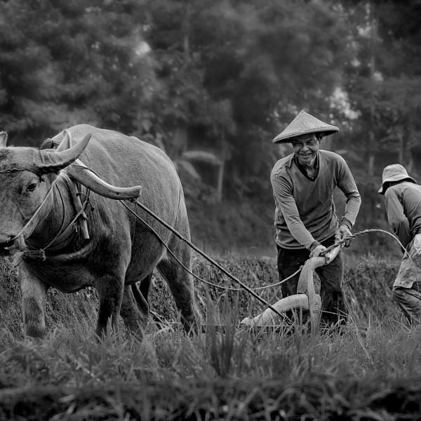 Plowing a Fields